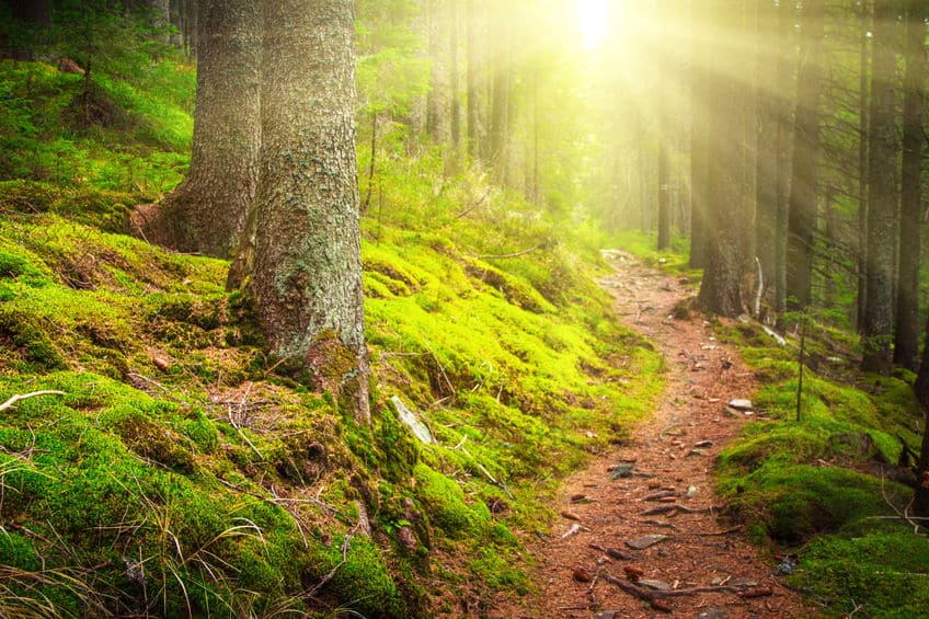 Waldweg sonnenbeschienen